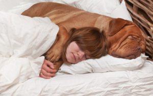 Seu cachorro dorme com você? Cuidado!