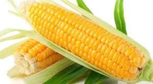 Alguns dos benefícios do milho