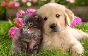 Amor animal – Como animais de estimação são benéficos à saúde