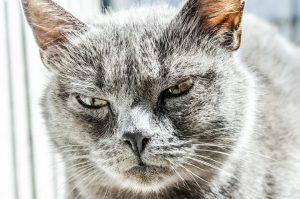 Raiva: Porque devemos vacinar nossos pets?